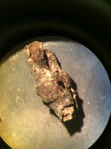 twig2016gulfcasediment-1